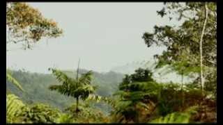 Serranía de los Yariguíes