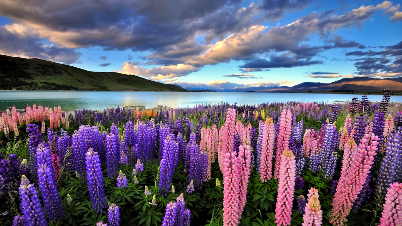 Most Beautiful Places In New Zealand Youtube