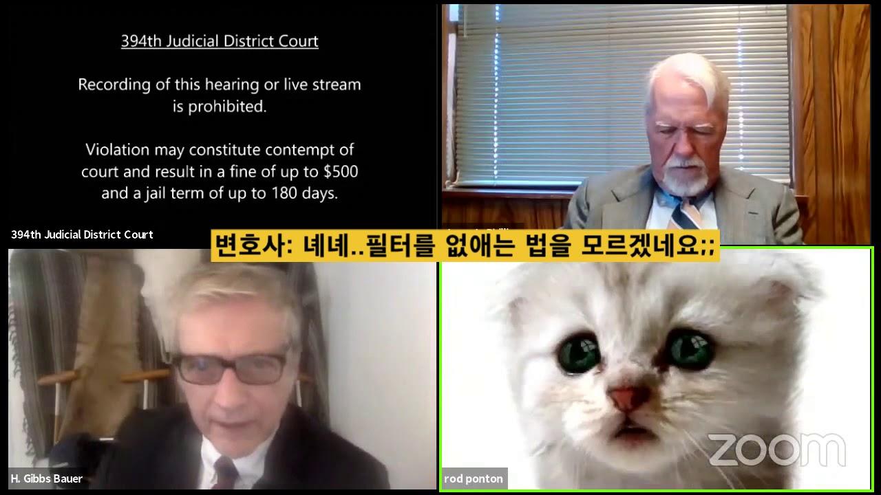 """""""저는 고양이가 아닙니다"""" 줌 회의 참석한 '고양이 변호사'"""