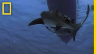 Shark Attack! | National Geographic