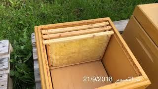 عالم النحل ,شرح اهمية فتحات التهوية لخلايا النحل/2/