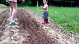 Tomas planting okra with