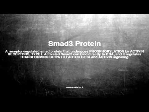 Medical vocabulary: What does Smad3 Protein mean