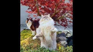 What Do Cats Like In A Garden