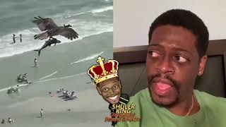 Shuler King - What Bird On Earth Eats Sharks?!!