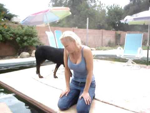 Brenda 39 s koi pond that is a converted swimming pool youtube for Pool koi aquatics ltd