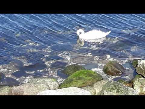 Öresund Malmö Sverige NirvanaVEVO Chris Zabriskie