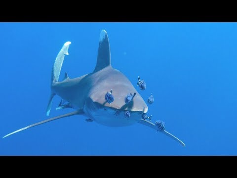 Brother Islands Liveaboard - One Of The Best Dive Sites On The Planet