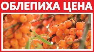 видео Купить замороженную малину в Москве оптом