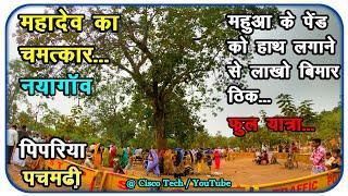 महादेव का चमत्कार महुआ के पेड़को हाथ लगाने से लाखो लोग ठीक नयागांव पिपरिया फुल यात्रा Nayagaon 4k