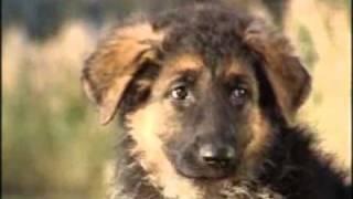 Происхождение собаки.flv