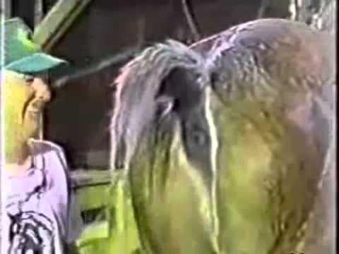 Funny | Bark Vines  |Funny Horse Farts