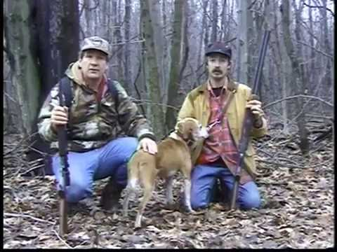 Squirrel hunt with a great  dog