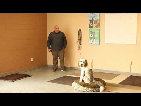 TYD60 Moment- How to Train a Dog the Place Command- Ty the Dog Guy