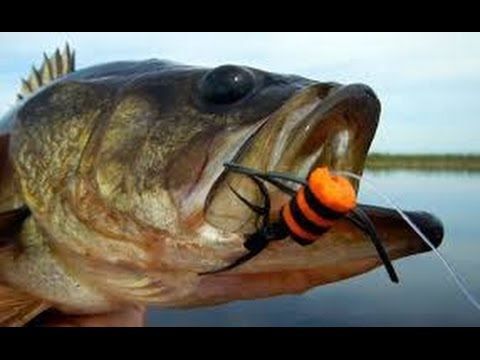 Fly Fishing In Ponds + EPIC TOPWATER