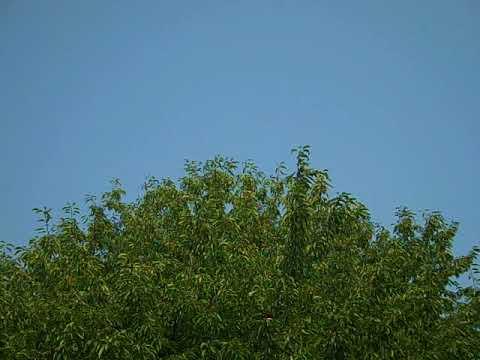 Empty Spokane Sky 8.10.18 10:03AM