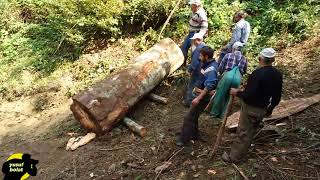 Erbaa Narlıdere Köyü Orman Kesimi