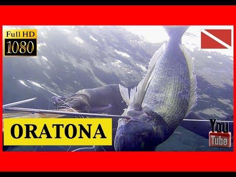Pesca sub 2019 – Grossa Orata all'alba !