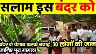 30 लोगों की जान बंदर ने पेशाब करके बचाई, पूरा मामला जानकर आप भी हो जायेंगे हैरान
