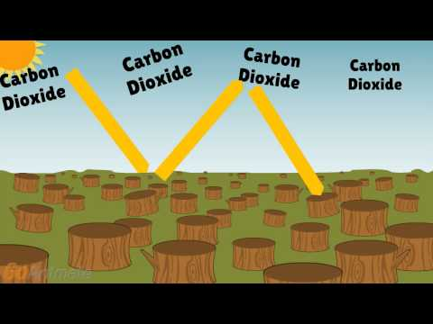 Deforestation Effects on Climate