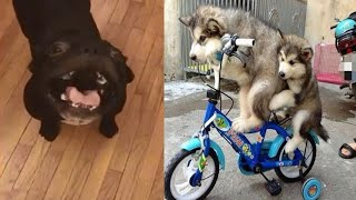 Приколы с животными Смешные животные 2 FUNNY ANIMALS VIDEOS 2