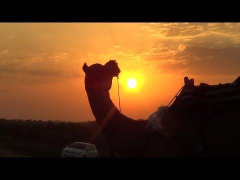 Pushkar Camel Safari-Rajasthan
