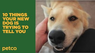 10 Things Your New Dog Is Trying To Tell You: New Pet Tips By Petco