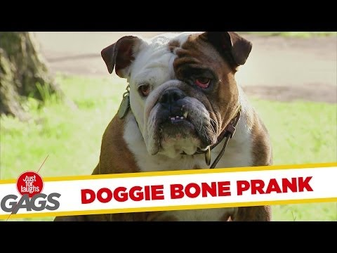 Teleporting Dog Bone Prank