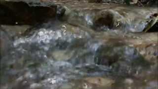Relaxing Sounds of a running creek