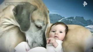 Откуда собаки родом и почему в древности псов обожествляли