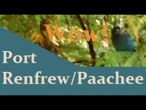 Port Renfrew/Paacheedaht Camping Video