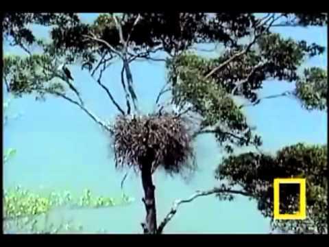 7  Chim ung san moi nuoi con 2