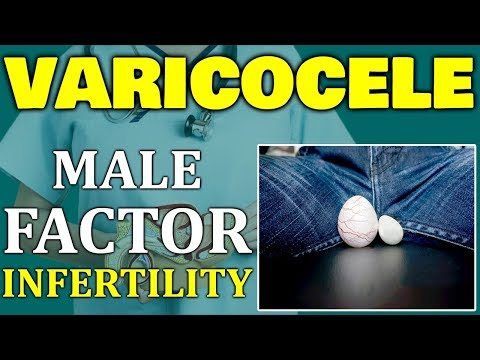 How do varicoceles cause male infertility   Male Factor Infertility   Male infertility & varicocele