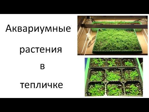 Растения переднего плана Archives Оформление аквариума
