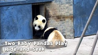 Two Baby Pandas Play Hide-and-seek | iPanda