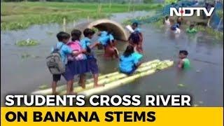 No Bridge, Assam Students Cross River On Banana Stems To Reach School