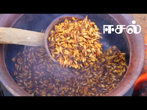 Eesal | Cooking Eating Winged TERMITES | Healthy village food | Village Cooking Channel