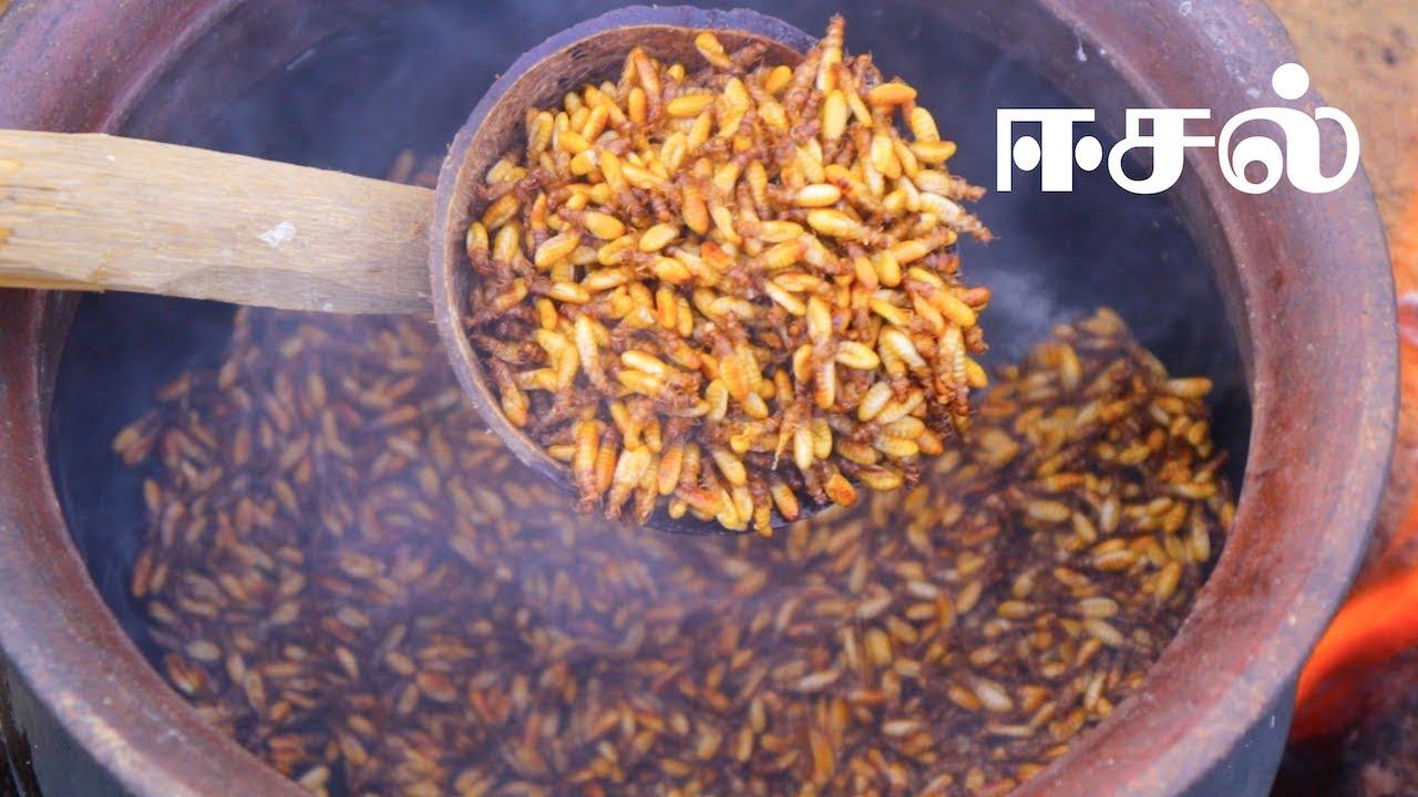 Eesal  Cooking Eating Winged TERMITES  Healthy village