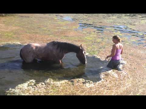 Leo June 12- Playing in pond- Mustang Million Horse