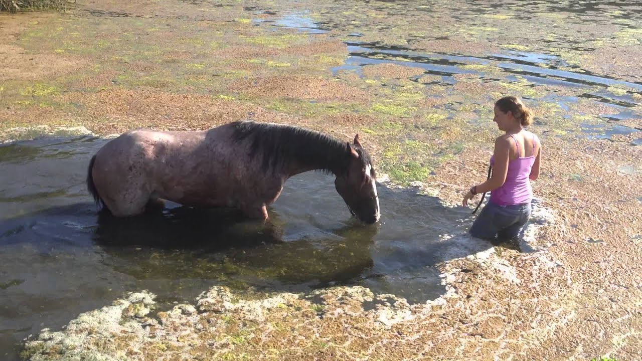 Leo June 12 Playing In Pond Mustang Million Horse Youtube