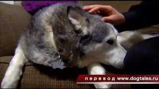 Собака-ворюга поймана в магазине