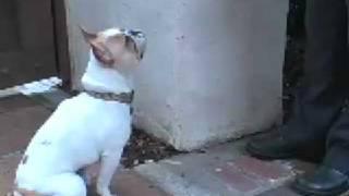 Dog Training - Housebreaking - Potty Payola