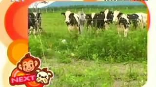 Phim Nhat Ban | Funny animals Đười Ươi và chó Episode 01 Tại Nhật Bản | Funny animals Duoi Uoi va cho Episode 01 Tai Nhat Ban