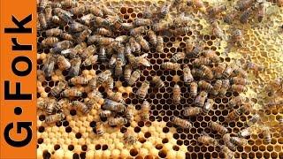 Beekeeping 101 Nuc Hive Inspection - GardenFork.TV