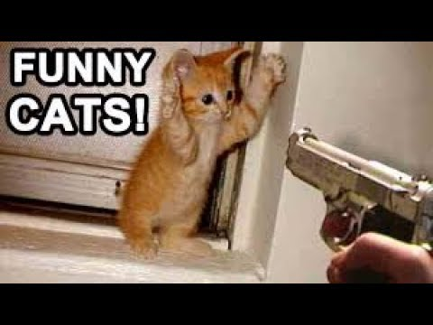 crazy-funny-cats-that-will-make-you-fail-this-laugh-challenge-must-watch