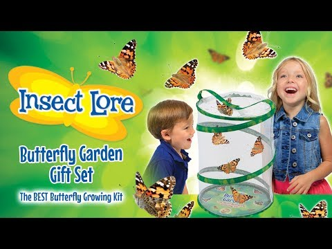 INSECT LORE'S BUTTERFLY GARDEN GIFT SET! | A Toy Insider Play by Play