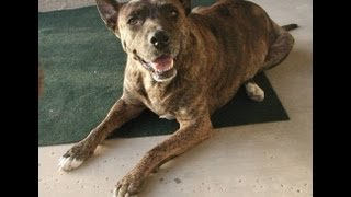 Obama Against Dog Breed Specific Legislation