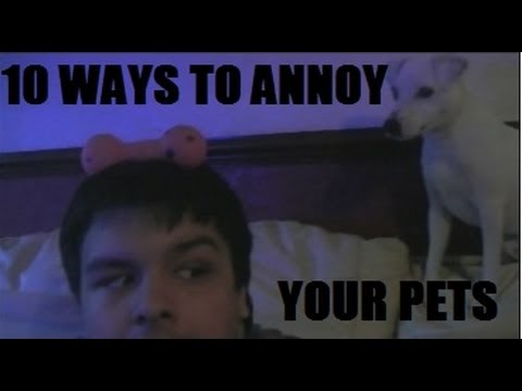 10 Ways To Annoy Your Pets