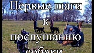 Первые шаги. Дрессировка собак начинается с обучения хозяев. Черный терьер, Пинчер и Шиба-Ину.
