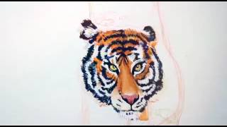 PERIYAR TIGER RESERVE - The importance of Tiger